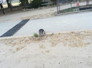 Living cat