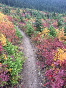 Fall colors light up the gloom hiking in clouds and overcast
